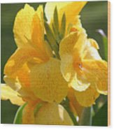 Yellow Canna Indica Wood Print