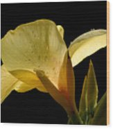 Yellow Canna Wood Print by Jeannie Burleson