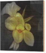 Yellow canna lilies Wood Print