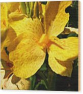 Yellow Canna Lily Wood Print