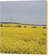 Yellow Canola Field Wood Print