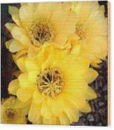 Yellow Cereus Wood Print