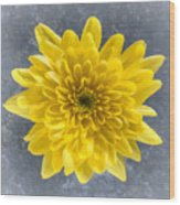 Yellow Chrysanthemum Flower Wood Print