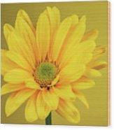 Yellow Chrysanthemum On Yellow Wood Print