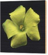 Yellow Clover Flower Wood Print