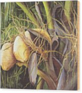 Yellow Coconuts From The Tropics  Wood Print