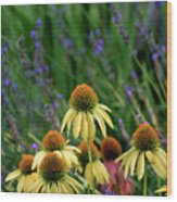 Yellow Coneflowers And Lavender 1633 H_2 Wood Print