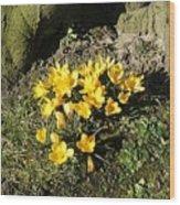 Yellow Crocus 1 Wood Print