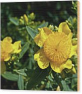 Yellow Crown Flower Wood Print