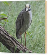 Yellow-crowned Night Heron 2 Wood Print