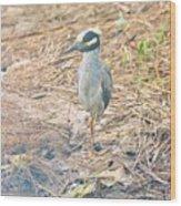 Yellow Crowned Night Heron Along The Tidal Creek Wood Print
