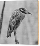 Yellow-crowned Night Heron Black And White Wood Print