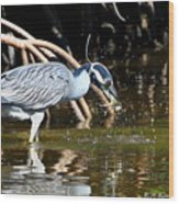 Yellow Crowned Night Heron Catches A Crab Wood Print