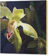 Yellow Cymbidium And Shadows Wood Print