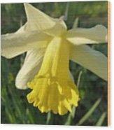 Yellow Daffodil 2 Wood Print