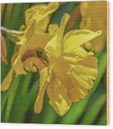 Yellow Daffodil May 2016. Wood Print