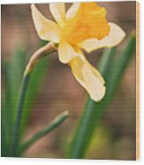 Yellow Daffodil Wood Print