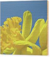 Yellow Daffodils Flowers Art Blue Sky Spring Baslee Troutman Wood Print