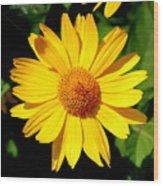 Yellow Daisey Wood Print