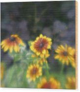 Yellow Daisies In Monets Garden Wood Print