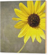 Yellow Daisy By Darrell Hutto Wood Print