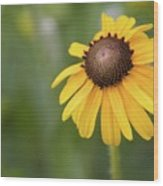 Yellow Daisy II Wood Print