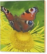 Yellow Daisy With Butterfly Wood Print