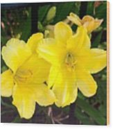 Yellow Day Lilys Wood Print