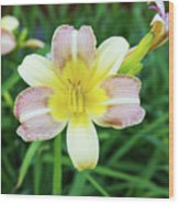 Yellow Daylily Wood Print