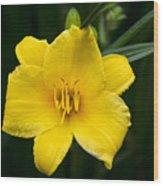 Yellow Daylily Flower Wood Print