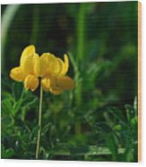 Yellow Dew Drops Wood Print