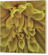 Yellow Dinner Plate Dahlia Wood Print