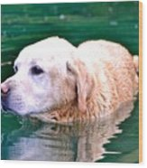 Yellow Dog In Pond Wood Print