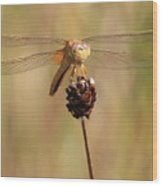 Yellow Dragonfly Wood Print