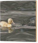 Yellow Duckling Wood Print