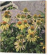 Yellow Echinacea, Straw Flowers Gray Stone Background 2 9132017  Wood Print