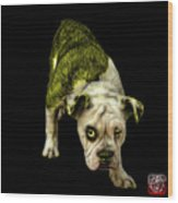 Yellow English Bulldog Dog Art - 1368 - Bb Wood Print