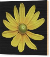 Yellow Eyed Daisy In Black Wood Print