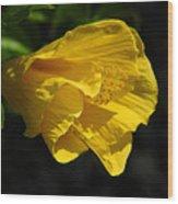 Yellow Fellow Wood Print