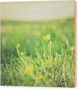 Yellow Fields Wood Print