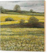 Yellow Fields Wood Print