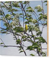 Yellow Finch And Flowers Wood Print