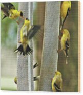 Yellow Finch Feeding Frenzy Wood Print