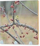 Yellow Finch In Crab Apple Tree Wood Print