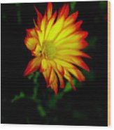 Yellow Fire Wood Print