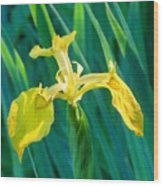 Yellow Flag Wildflower Wood Print