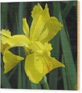 Yellow Flight Wood Print