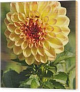 Yellow Flora Wood Print
