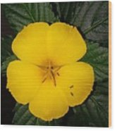 Yellow Flower 2 Wood Print