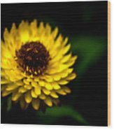 Yellow Flower 6 Wood Print